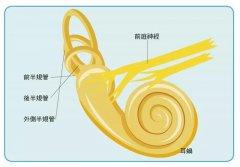 耳石症是什么,跟眩晕有什么关系